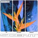 Scent - KIM EP - VINYL